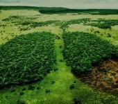 A jövő zöld